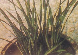 Sexe Graruit Lommel / Adultère Norfolk
